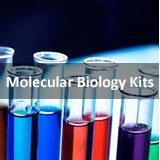 Soil DNA Isolation Mini Kit