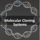 Strataclone Bluent PCR cloning Kit - Limited Stock