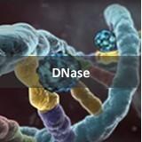 DNase I RNase free HC